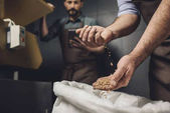 Pivovar pracovník kontroly zrna