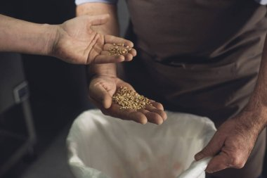 Brewery workers inspecting grains