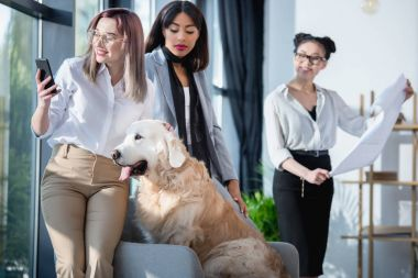 multiethnic businesswomen with dog working at office