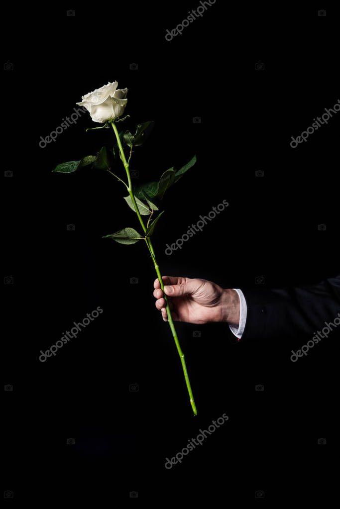 man holding white rose