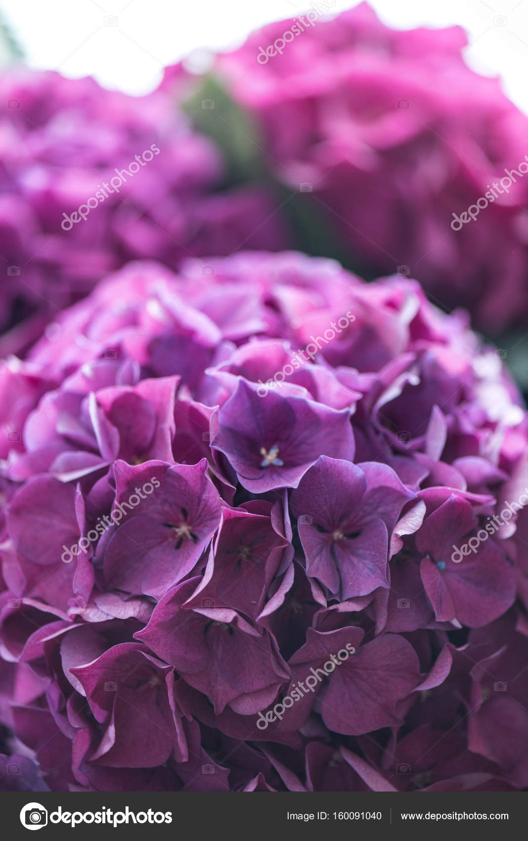 Beautiful Blooming Flowers Stock Photo Arturverkhovetskiy 160091040