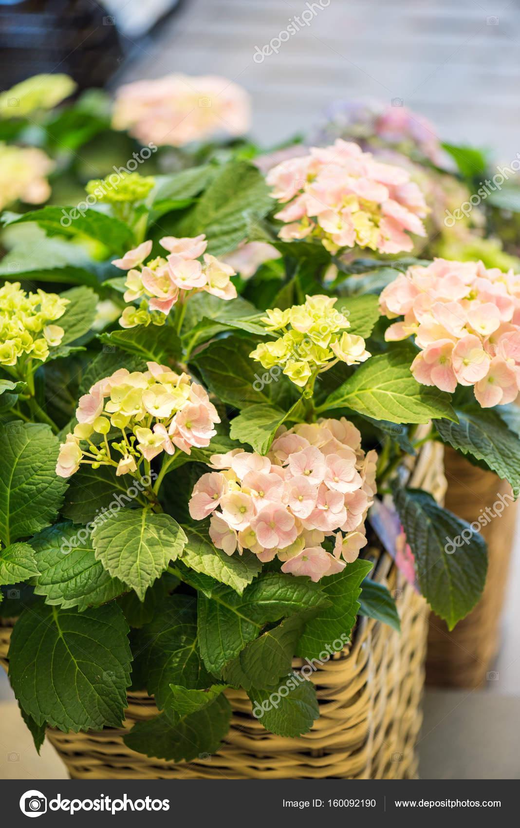 Beautiful flowers in flower shop stock photo arturverkhovetskiy beautiful flowers in flower shop stock photo izmirmasajfo Gallery
