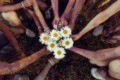 Fényképek fiatal meg a chamomiles