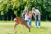 Photo family looking at deer in park
