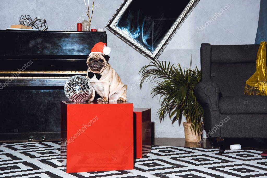pug puppy in santa hat
