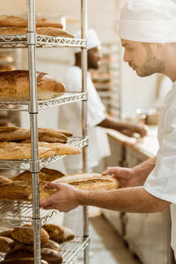 handsome baker putting fresh bread loaf on shelf at baking manufacture