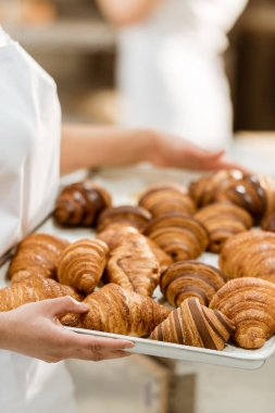 cropped shot of female baker holding tray with croissants on baking manufacture