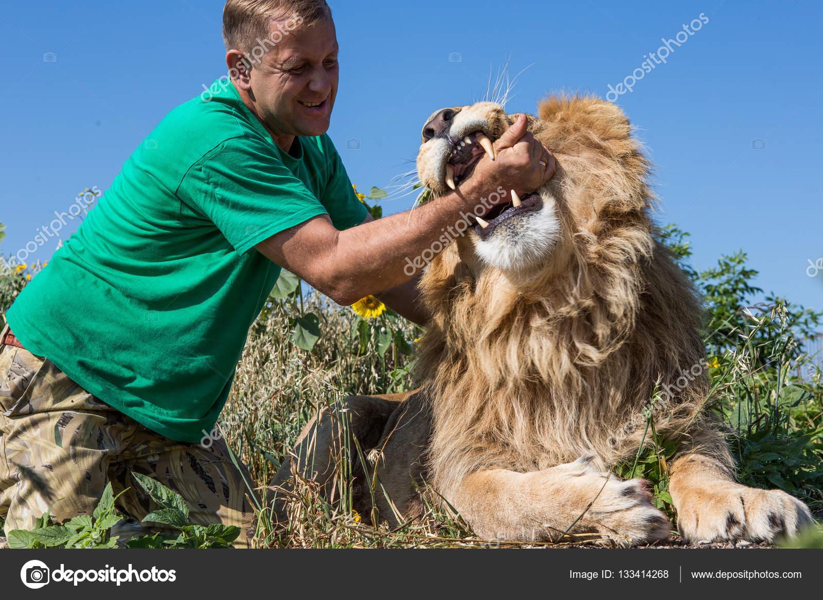 l homme met sa main dans la gueule du lion safari parc ta ga photographie korzun 133414268. Black Bedroom Furniture Sets. Home Design Ideas
