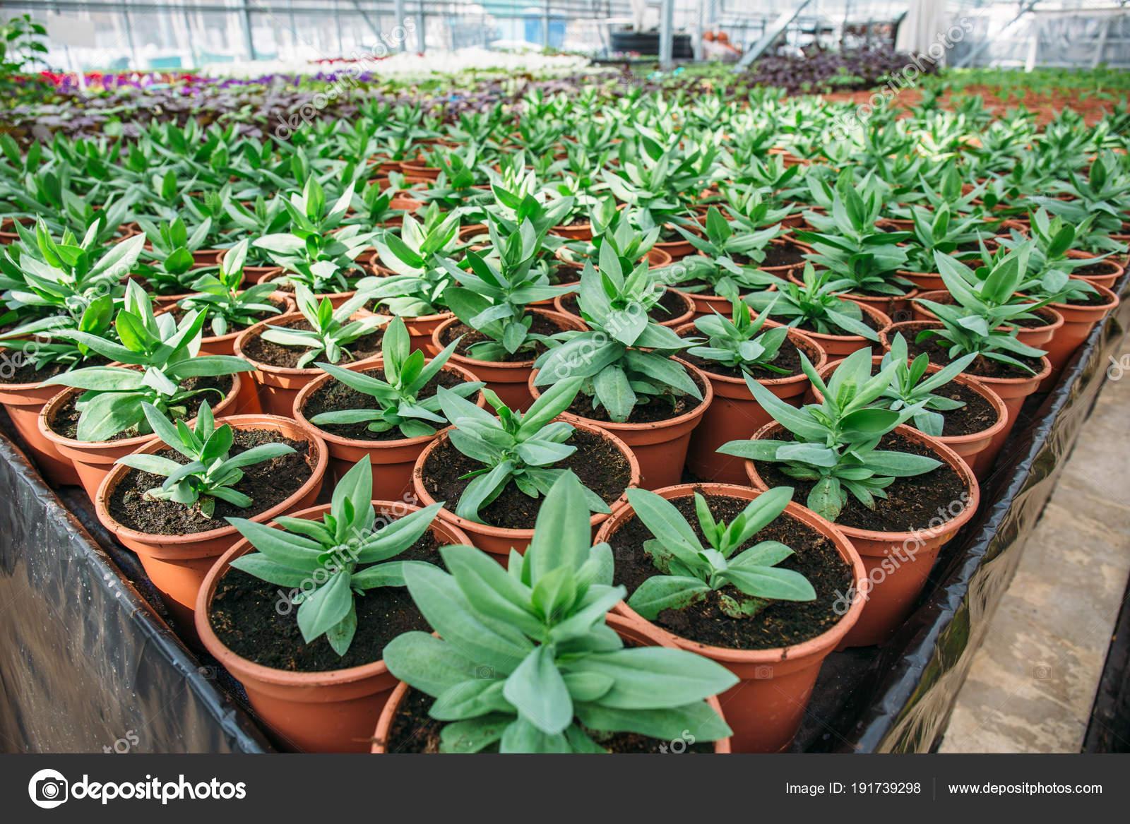 Plantas decorativas en moderno invernadero hidrop nico for Plantas para invernadero