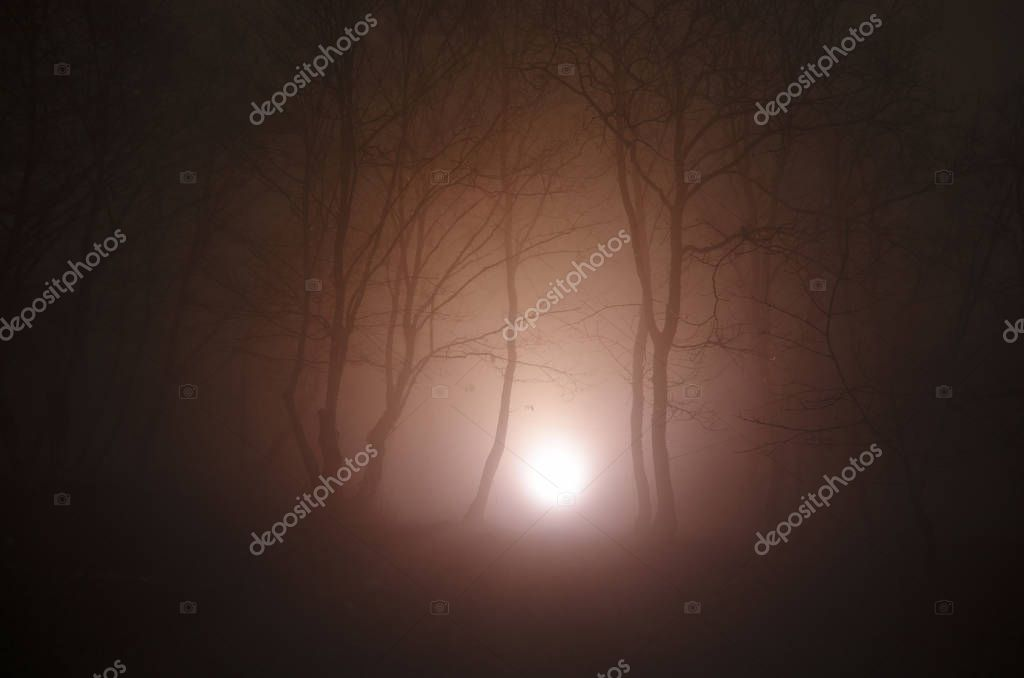 Фотообои surreal light in dark forest, Magic fantasy lights in the fairy foggy forest