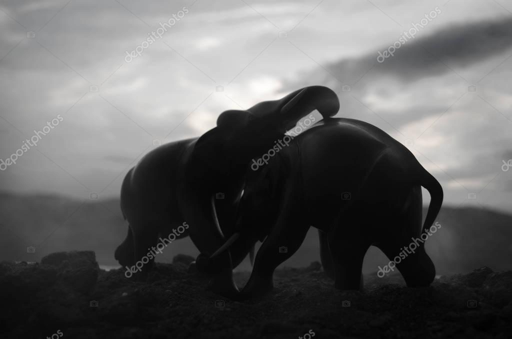 Fighting elephants at the hill.
