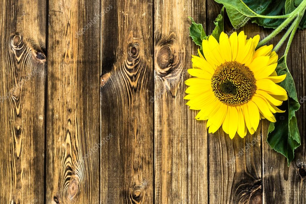 Sunflower On Rustic Wooden Background Flowers Backgrounds Stock Photo