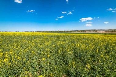 """Картина, постер, плакат, фотообои """"цветущее поле кольцы, голубое небо на горизонте цветы"""", артикул 139440486"""