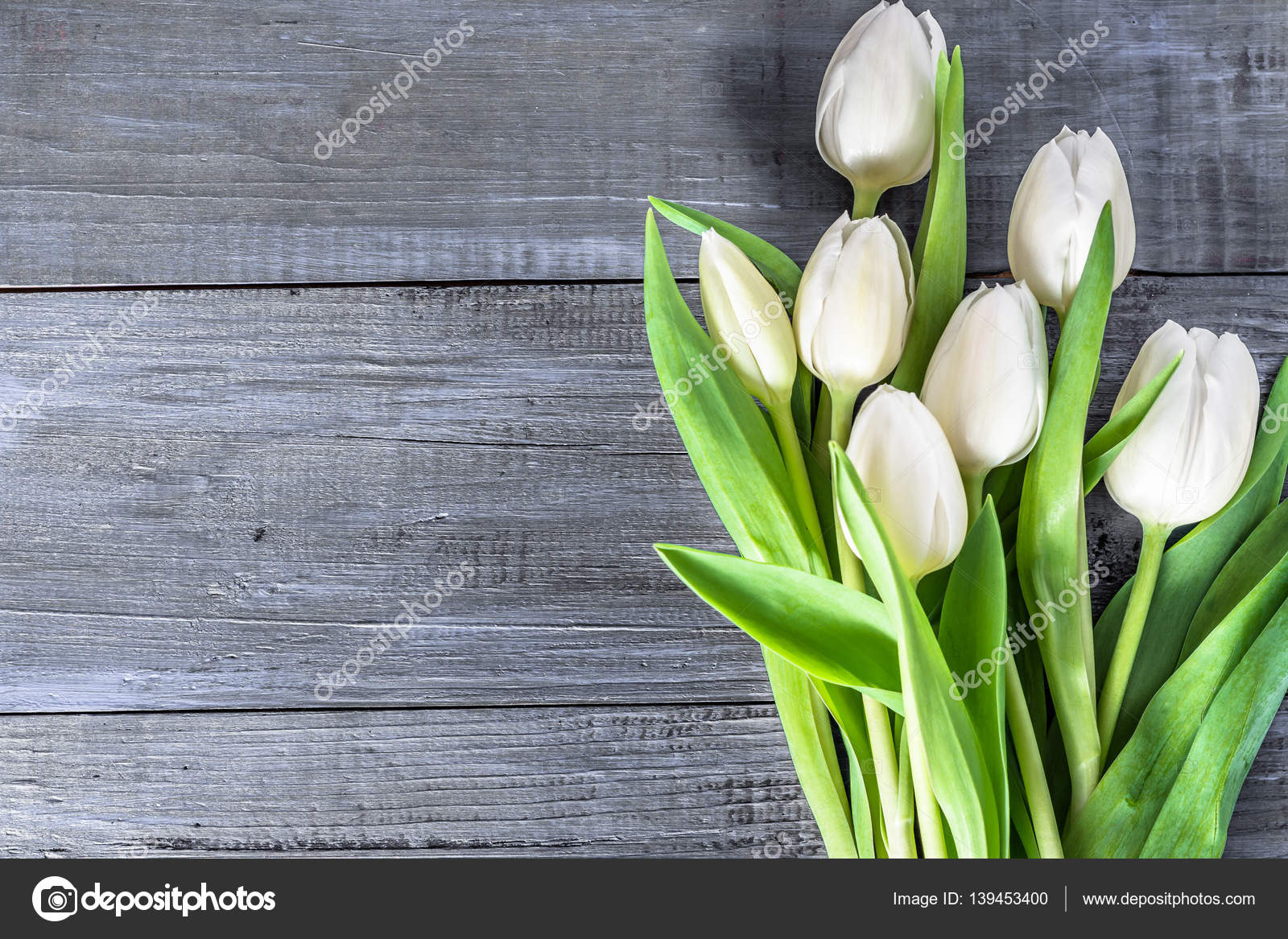 White Tulips Flowers On Wooden Table With Copy Space Top View