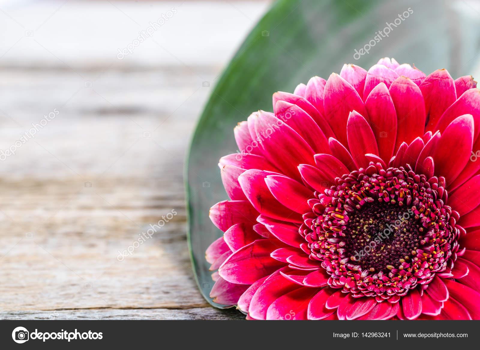 Flor de Gerber, tarjeta para dia de las madres, día de la mujer ...