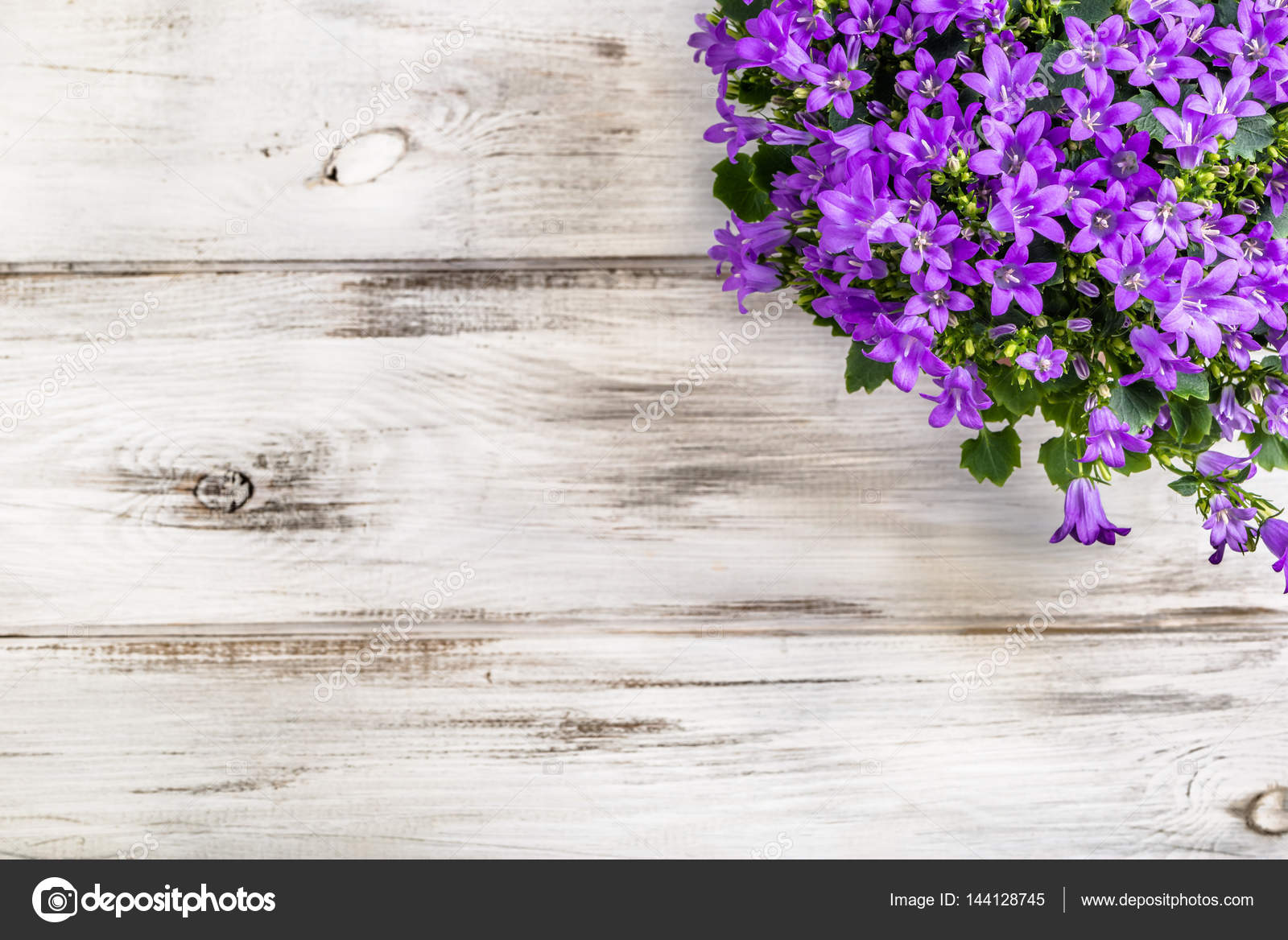 Spring Flowers Background With Copy Space Stock Photo C Alicjane