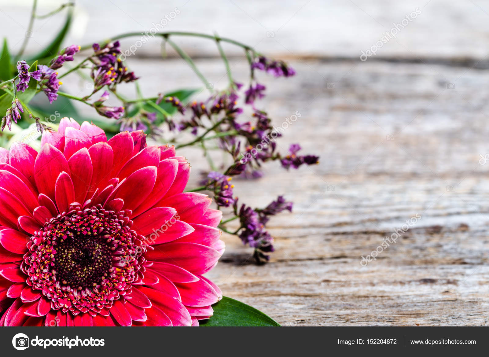 Pink Gerbera Flower Background For 8 March