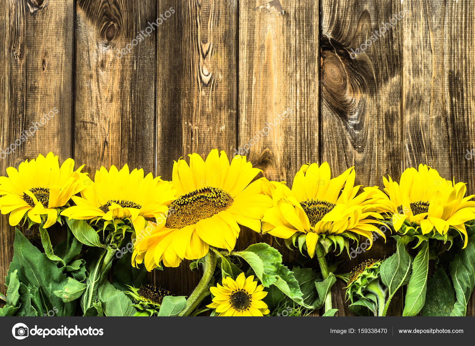 Sunflowers On Wooden Background Flowers Frame Stock Photo