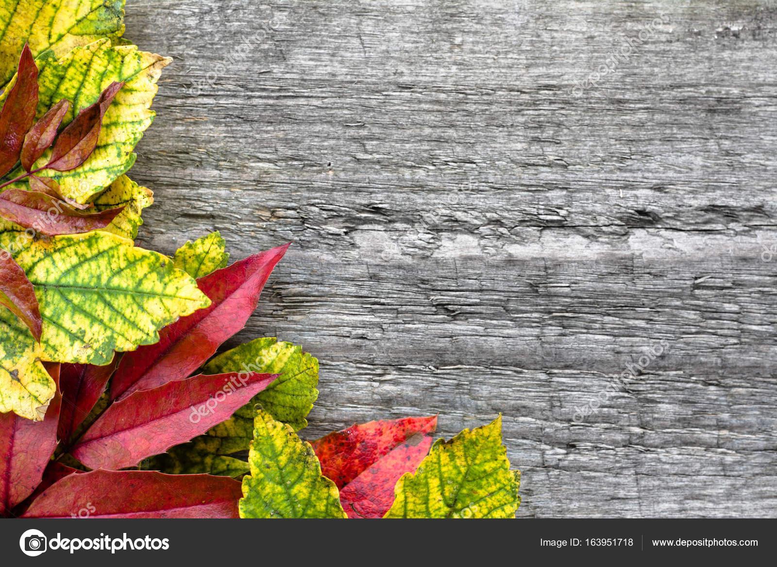 Laub Grenze Auf Holzernen Hintergrund Herbst Hintergrundbilder