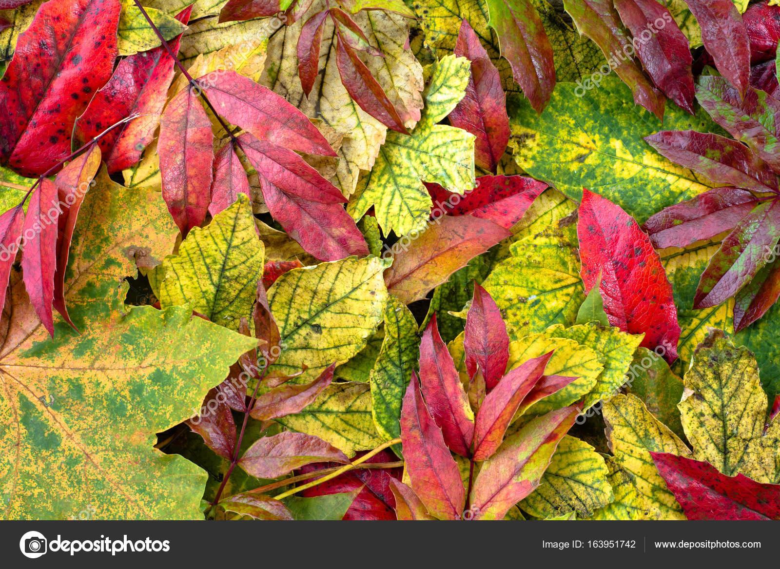 Foglie di autunno per il desktop sfondi gratis di caduta for Autunno sfondi desktop