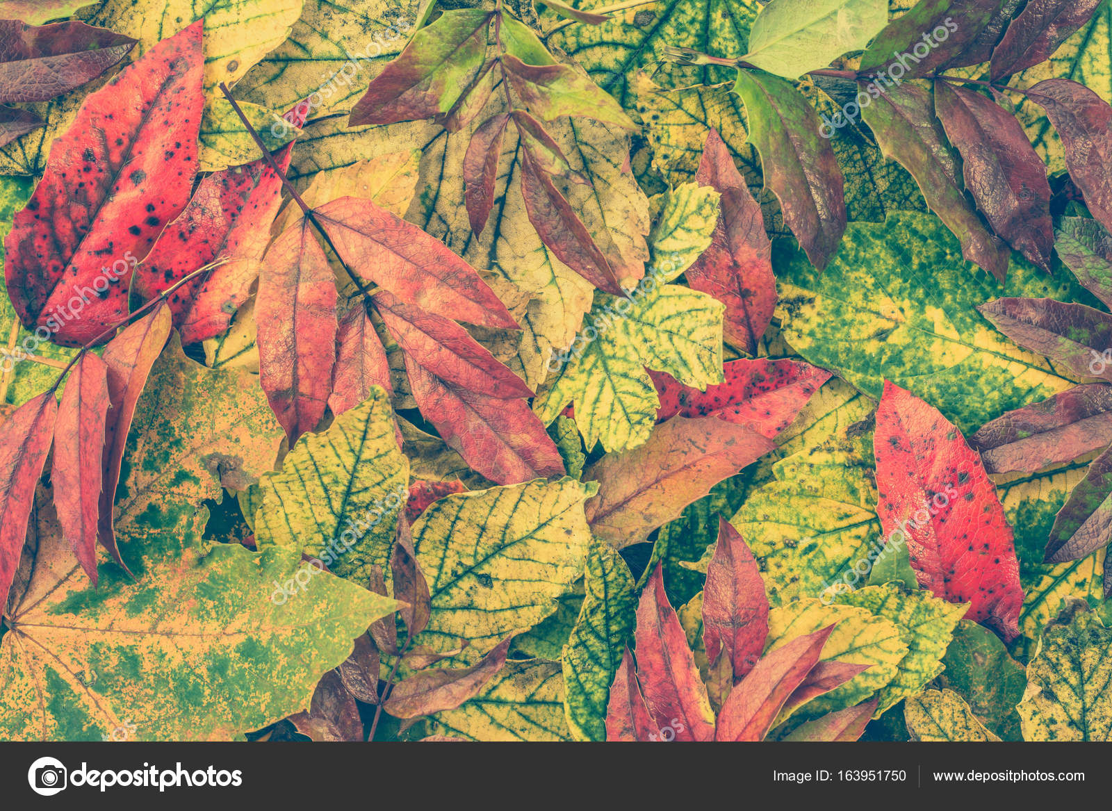 Fall Wallpaper Downloads Autumn Backgrounds With Colorful