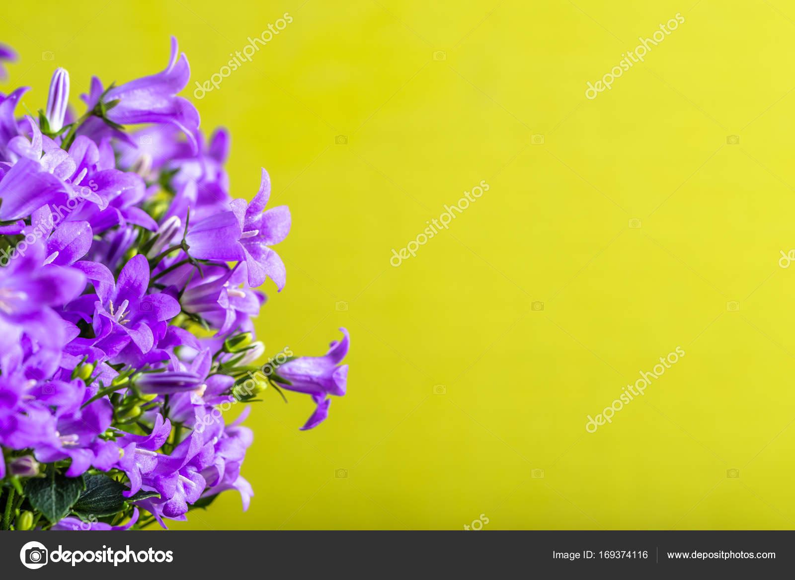 Spring Flowers Background With Copy Space Stock Photo Alicjane