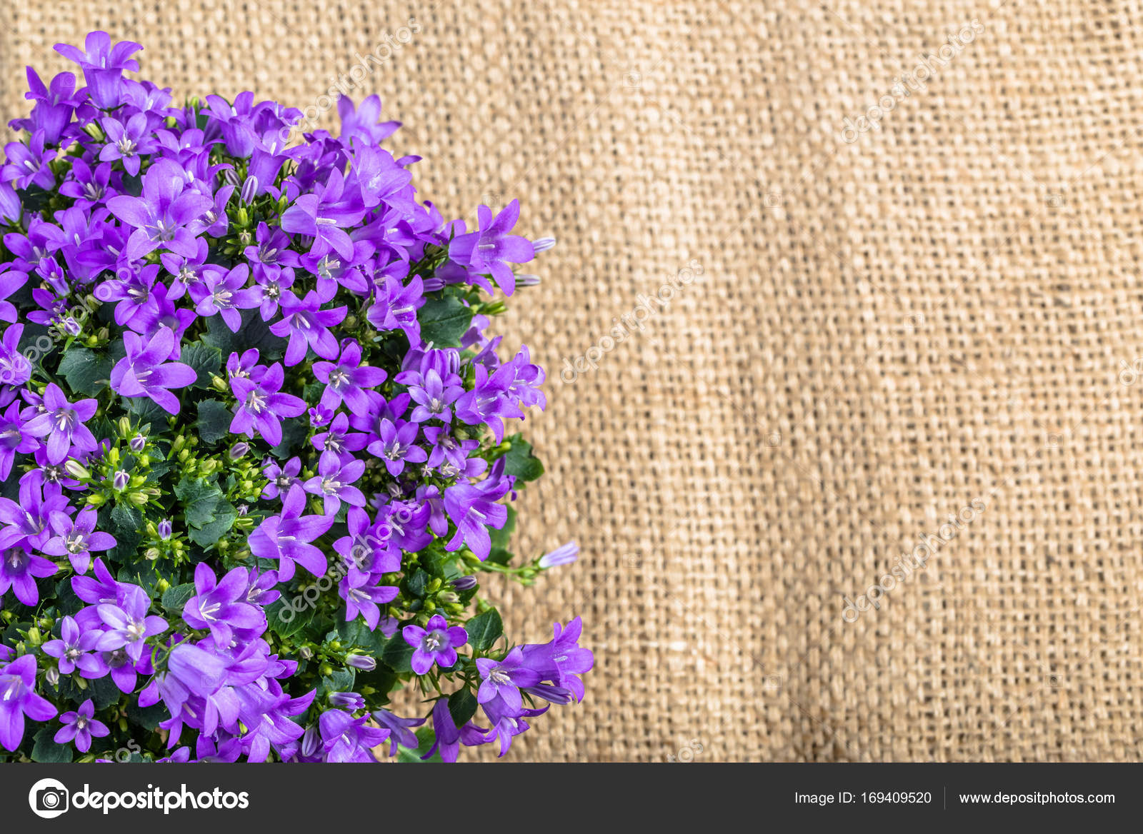 Spring Flowers Frame On Rustic Background Stock Photo C Alicjane