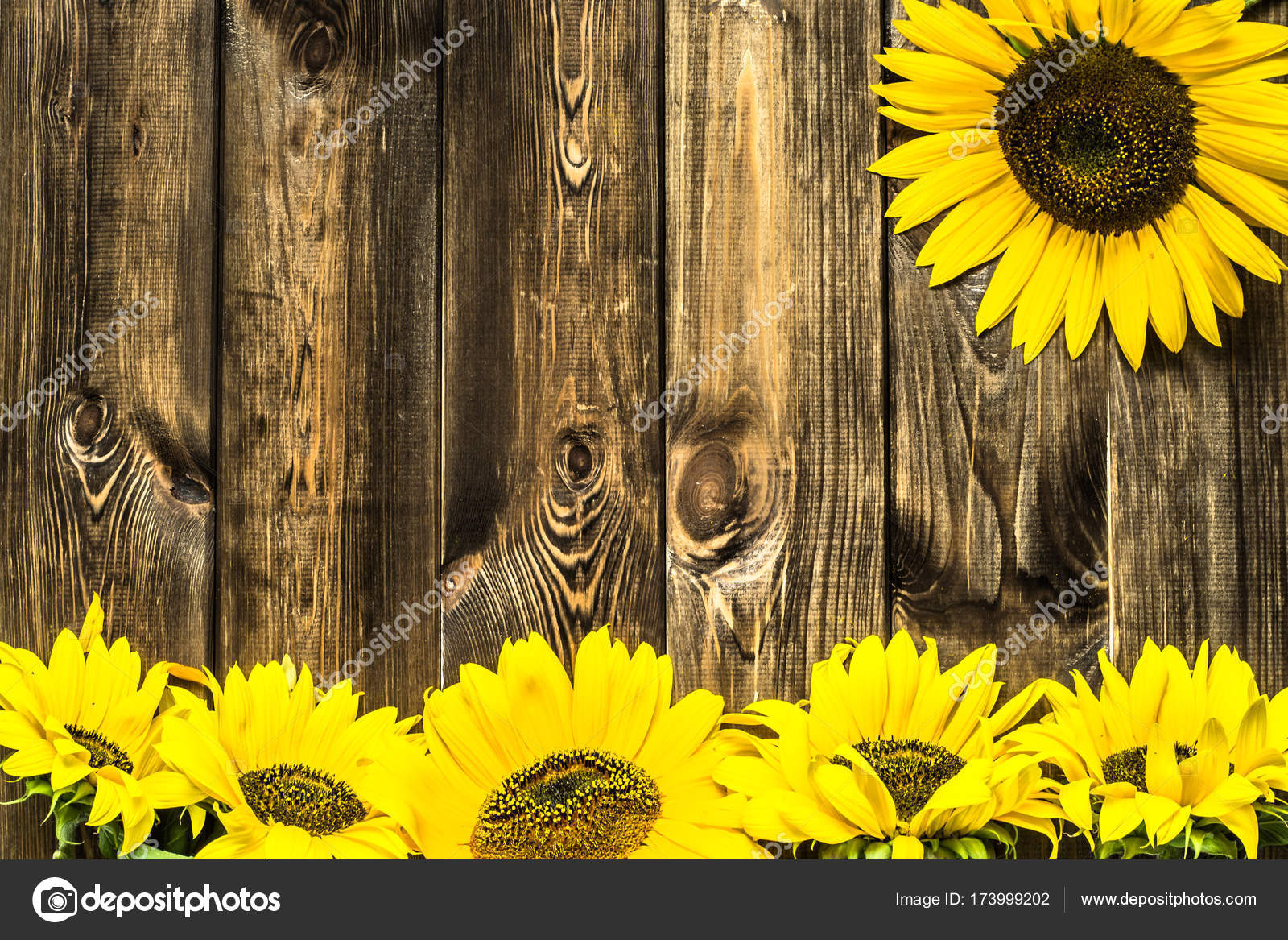Sunflowers On Wooden Background Autumn Flowers Stock Photo