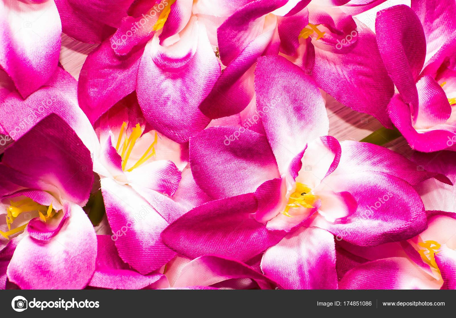 25 Hermoso Fotos Flores Portada Facebook