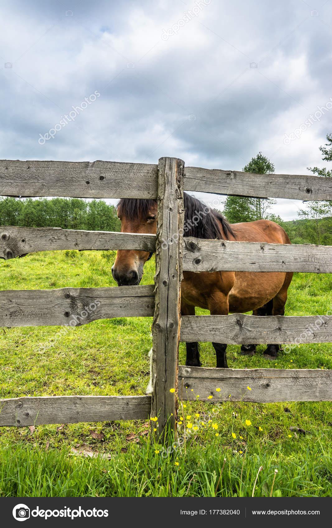 wooden farm fence. Beautiful Horse On Field Behind Wooden Fence, Farm, Country Landscape \u2014 Photo By Alicjane Farm Fence N