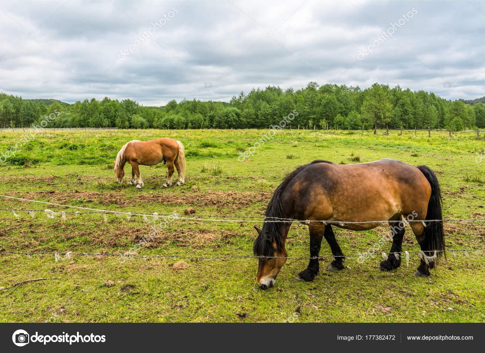 Fattoria con cavalli sul campo verde paesaggio della for Piani di casa di fattoria di cavalli