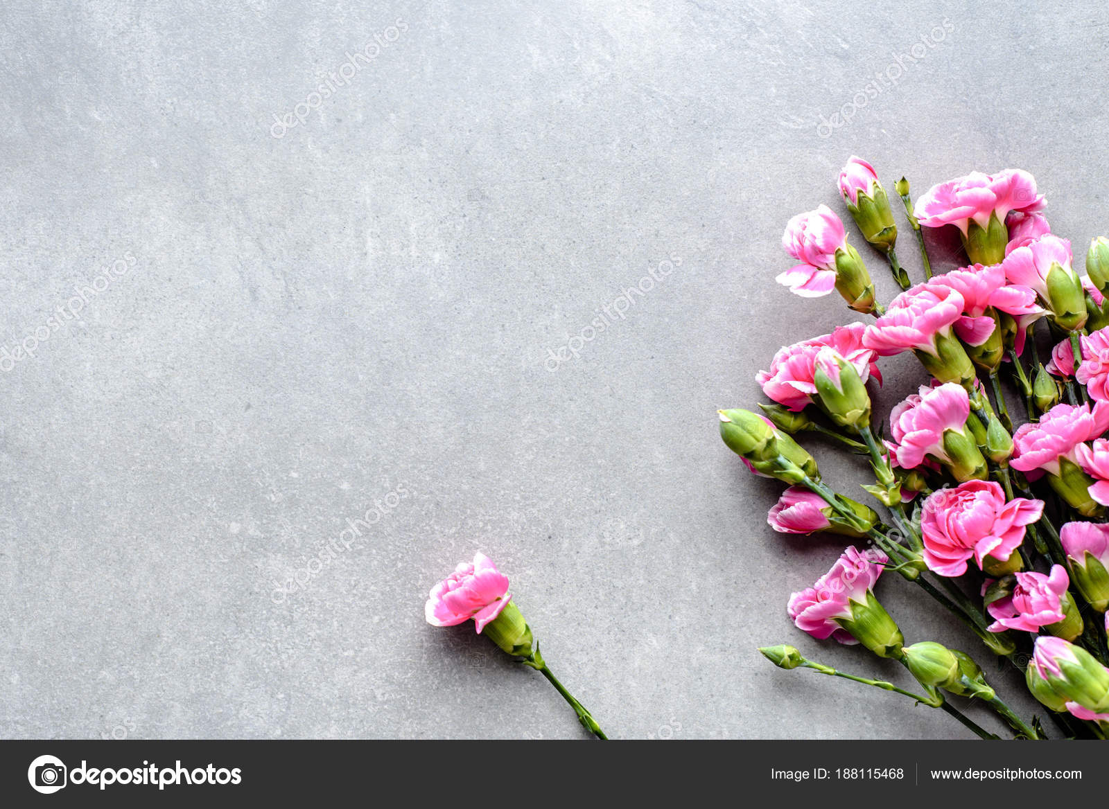 Pink cloves fresh spring flowers bouquet on grey background flat pink cloves fresh spring flowers bouquet on grey background flat lay top mightylinksfo
