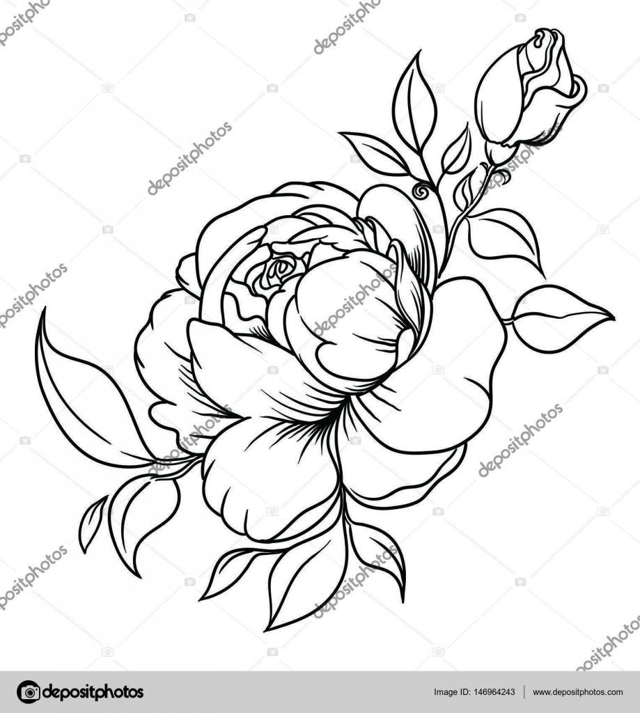 Bouquet de fleurs de pivoines encre de dessin dans un - Style de dessin ...