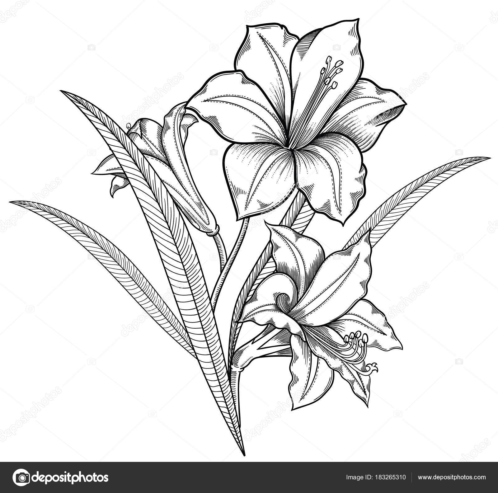 Vector Illustration Of Flowerstailed Flowers In Black And White