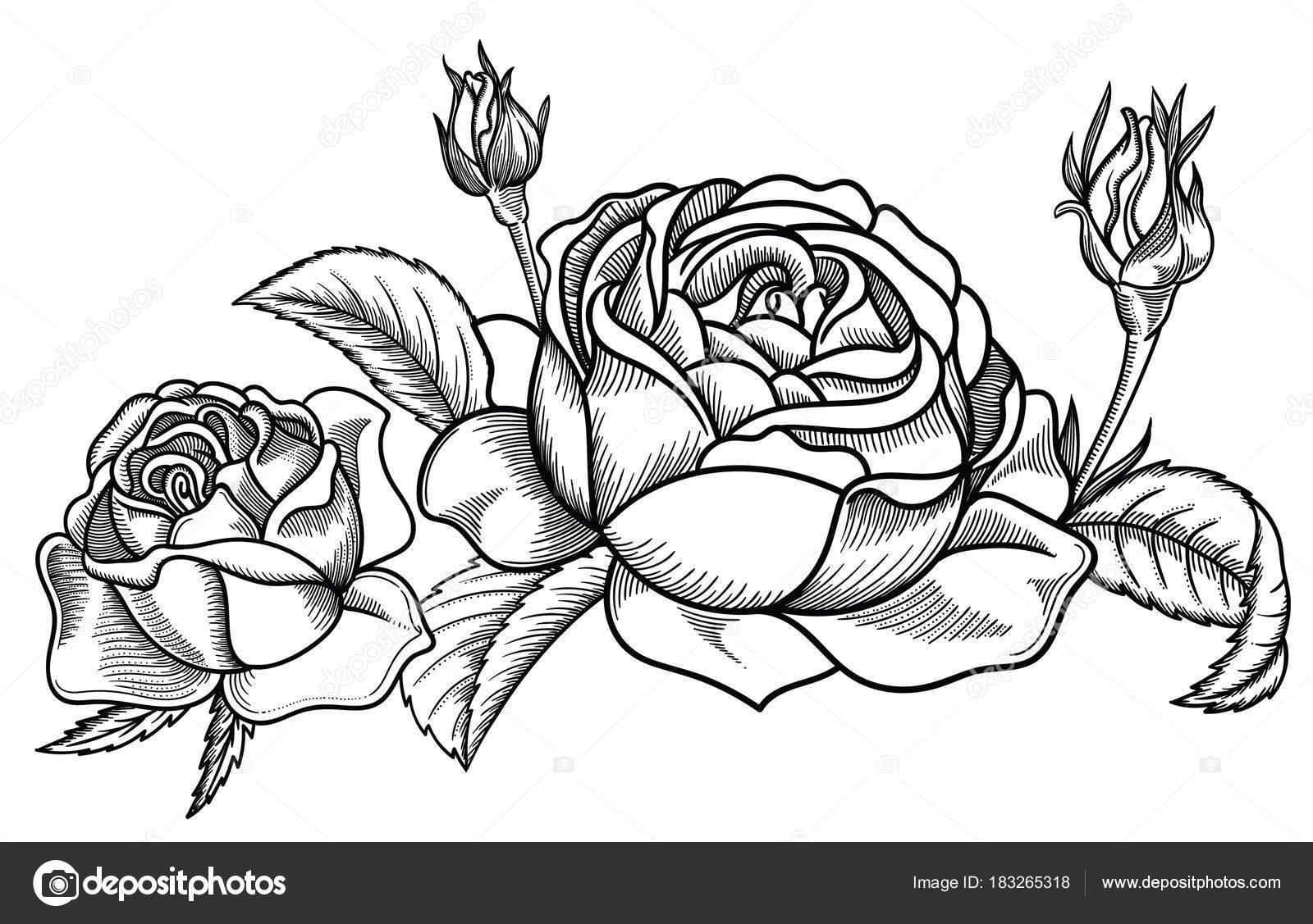 Ilustração Em Vetor De Flores Detalhadas Sobre Flores Em