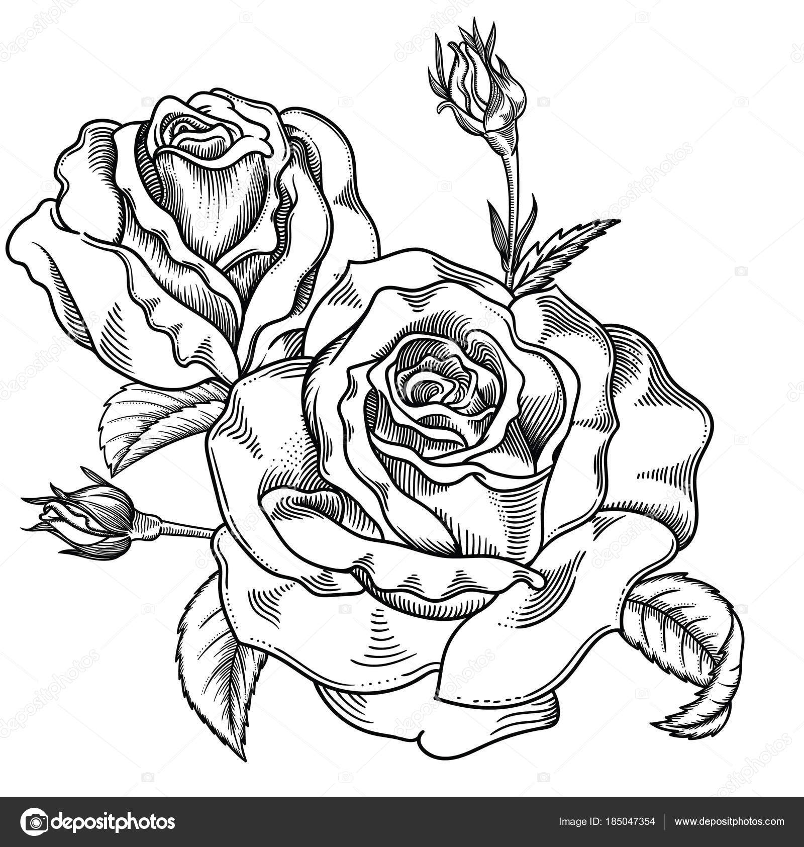 Blooming Sketch Black And White Roses Flowers Detailed Hand Drawn