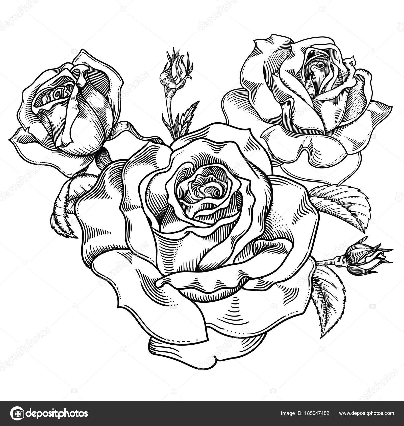 Blooming Black And White Sketch Roses Flowers Detailed Hand Drawn