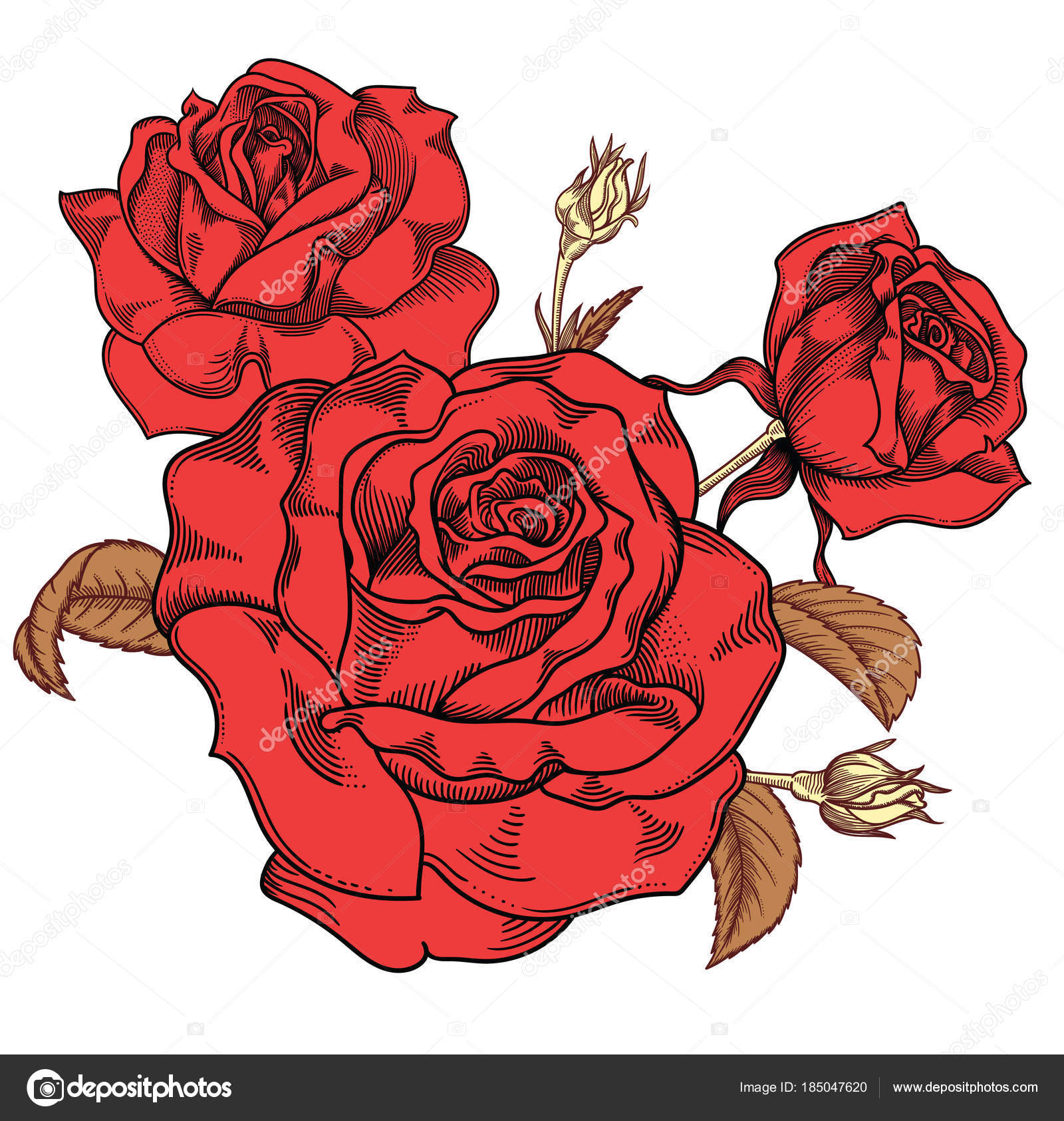 Fioritura Dei Fiori Di Rose Rosse Dettagliato Disegnato A Mano
