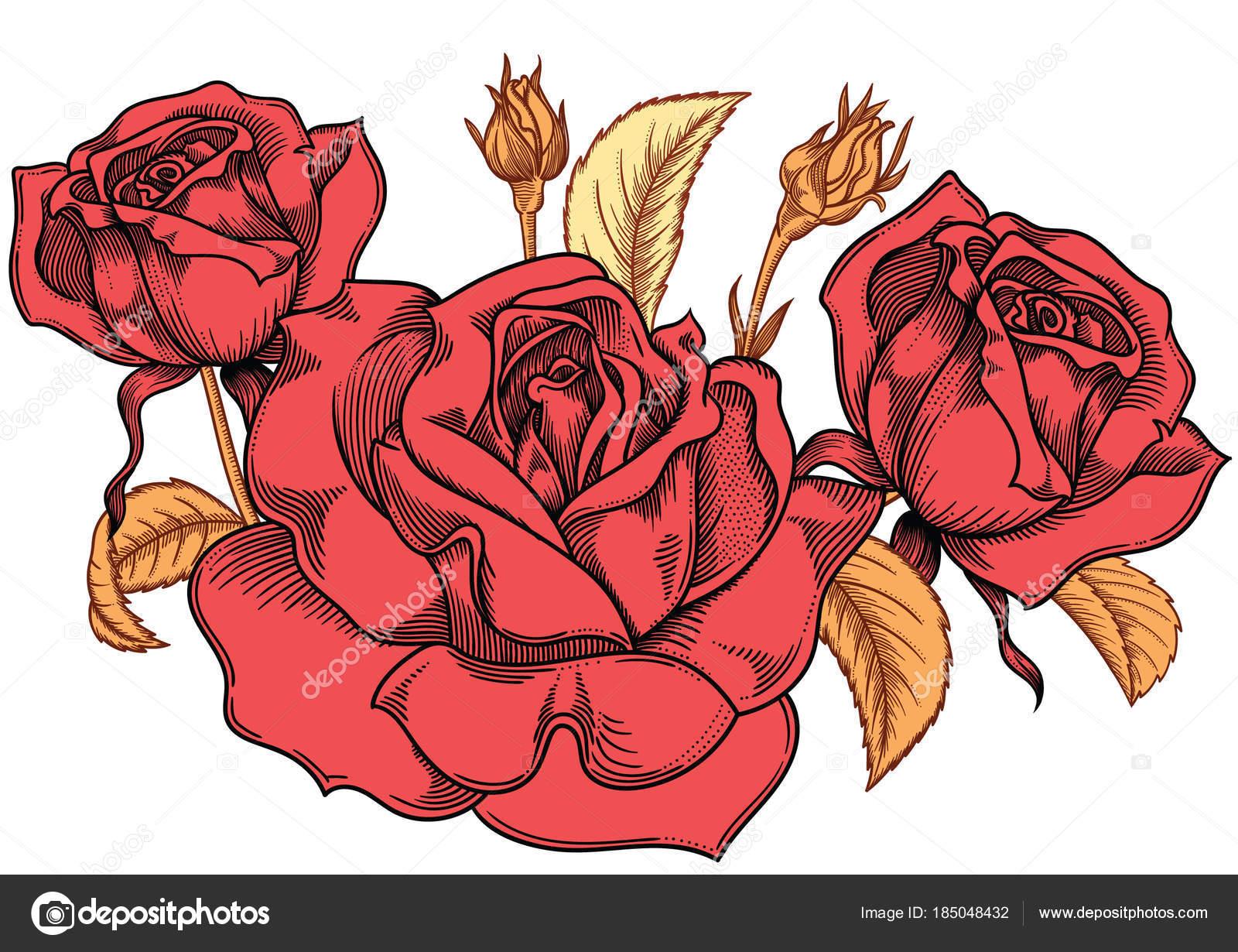 Dibujos Rosas Rojas Dibujadas Flor Flores De Rosas Rojas