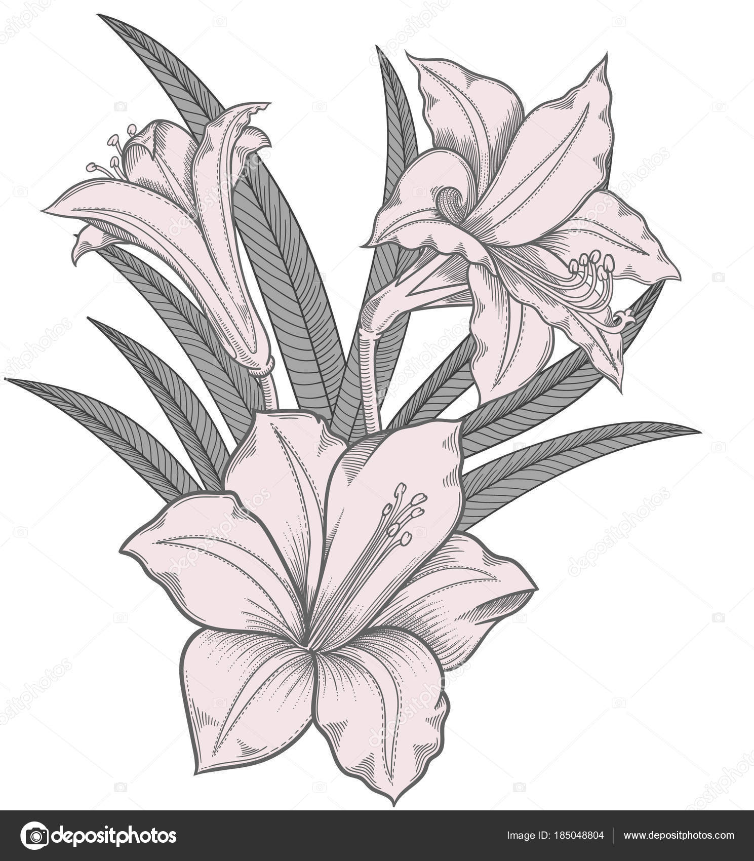 Blooming Lily Flowers Detailed Hand Drawn Vector Illustration