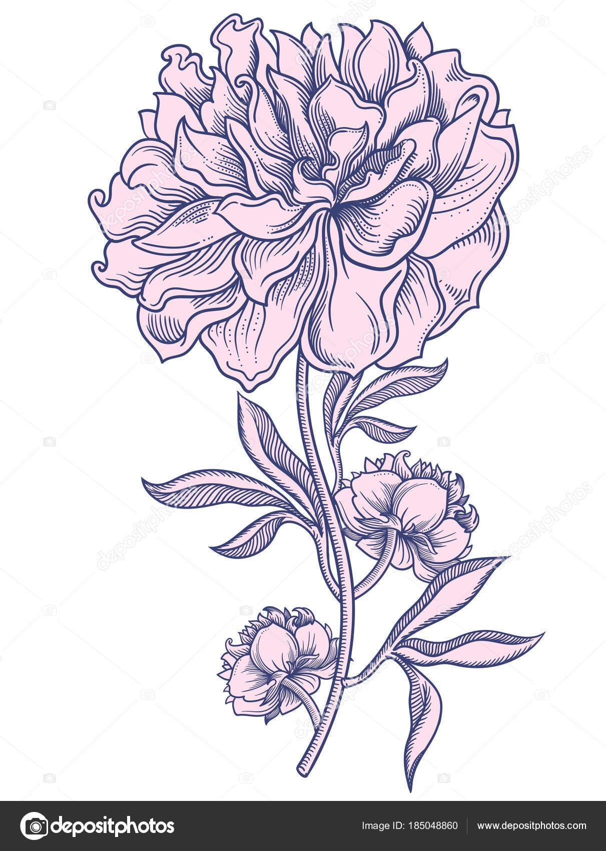 pfingstrose zeichnen blumen zeichnung, blühende pfingstrosen blumen, detaillierte handgezeichnete vektor, Design ideen