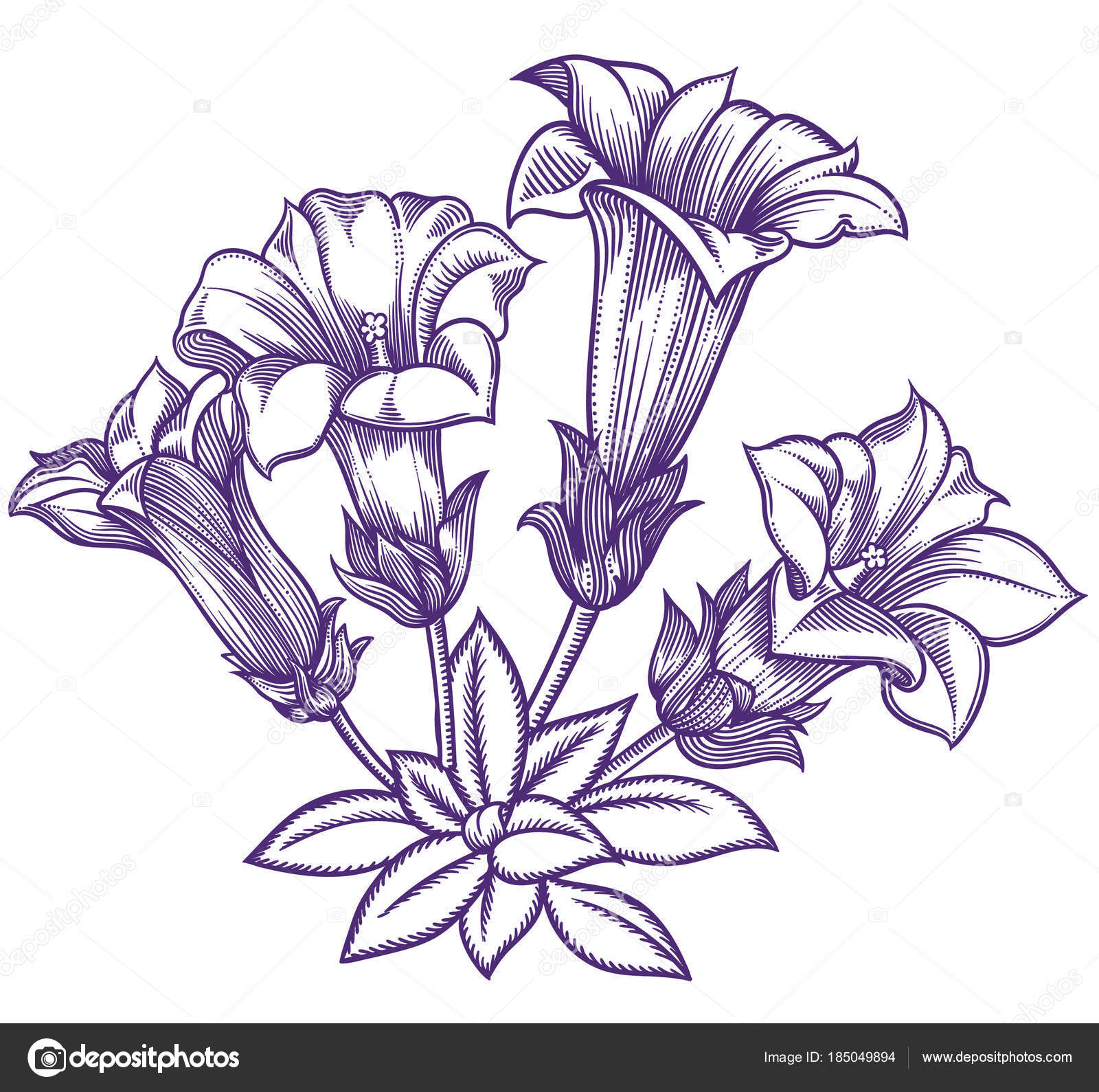 Blooming Forest Flowers Detailed Hand Drawn Vector Illustration Romantic Decorative Flower Drawing In Line