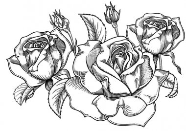 Blooming sketch black and white roses flowers , detailed hand drawn vector illustration. Romantic vintage decorative flower drawing . All line art  rose objects isolated on white background.