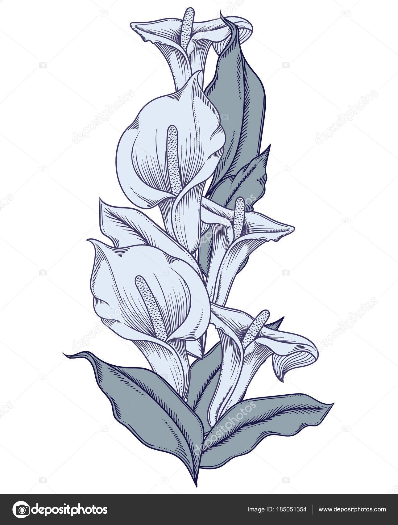 Hand Drawn Blue Blooming Callas Flowers Detailed Illustration Of
