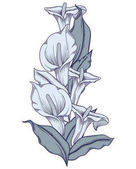 Hand drawn blue blooming callas flowers. Detailed illustration of decorative calla lily flowers in line style isolated on white background. Accurate hand drawing of romantic calla lilies.