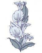 Kézzel rajzolt kék virágzó callas virágok. Részletes illusztráció dekoratív calla liliom virág vonalstílus elszigetelt fehér background. A romantikus calla liliomok pontos kézzel.