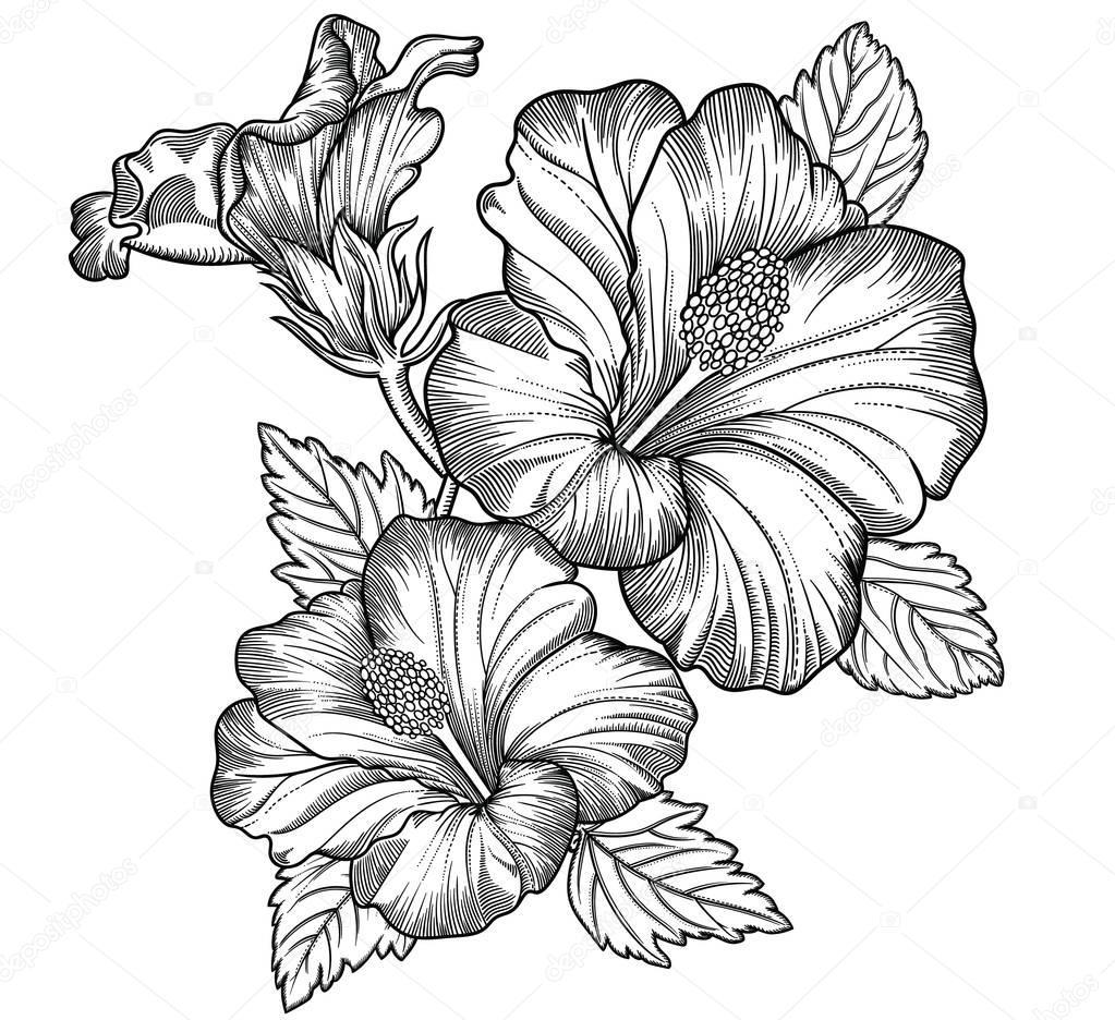 Drawings: Detailed Flower
