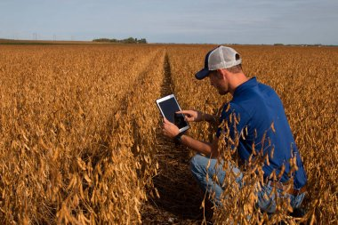 Farmer Inspecting Soybean Field with Tablet
