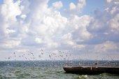 Fotografie Möwen hoben über dem Meer ab