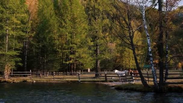 Pferde-Rest in der Nähe des Flusses nach einer langen Fahrt. Zwei Pferde, weißen und braunen Weiden auf grünen Weiden der Reiterhof. Country Lifestyle